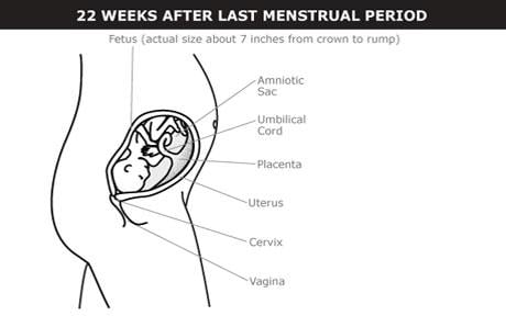 alos cuantos meses de embarazo empiezan los sintomas