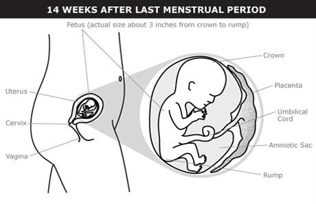 What Happens At 4 Months Of Pregnancy 16 Weeks Pregnant