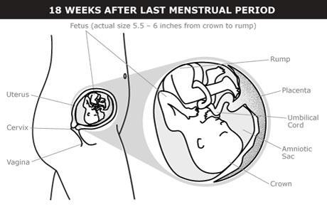 5 meses de embarazo cuantas semanas son
